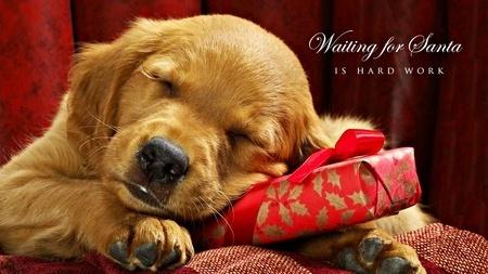 Puppy Bucks - A Heartwarming Christmas Story, boomerwarrior