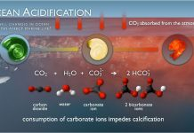 Ocean Acidification: Slow, Subtle But Deadly, boomer warrior