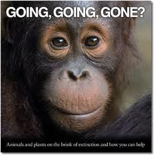 rate of species extinction