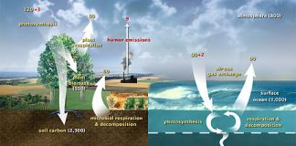 Source: Wikipedia Carbon Cycle