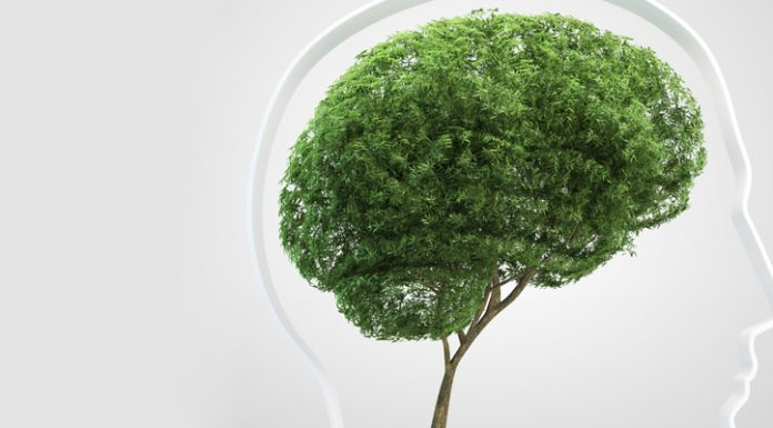 To Save the Environment, We Must Grow Businesses
