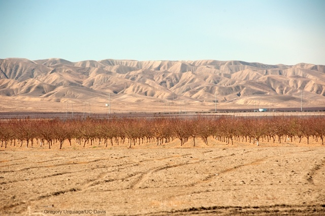 California - Drought Fixes or Race to the Bottom, boomer warrior