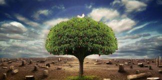 Biomass, Biofuel, Bioenergy, Biopower - Myth or Reality?, boomer warrior