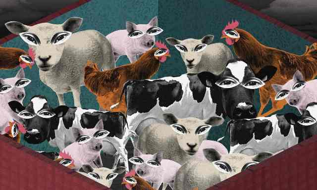 Let's Talk About the Cow, Pig, Chicken, Sheep in the Room, boomer warrior