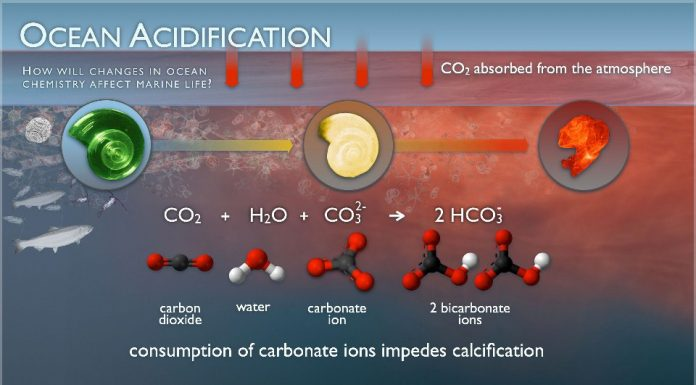 Ocean Acidification: Slow, Subtle But Deadly, boomer warrior