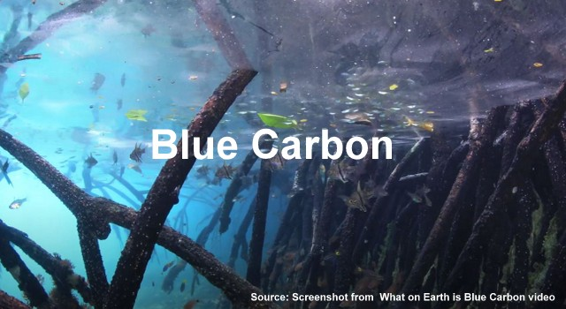 What On Earth Is Blue Carbon?, Below2C