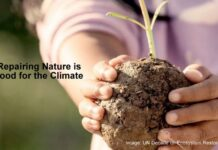 Repairing Nature Is Also Good For The Climate, Below2C