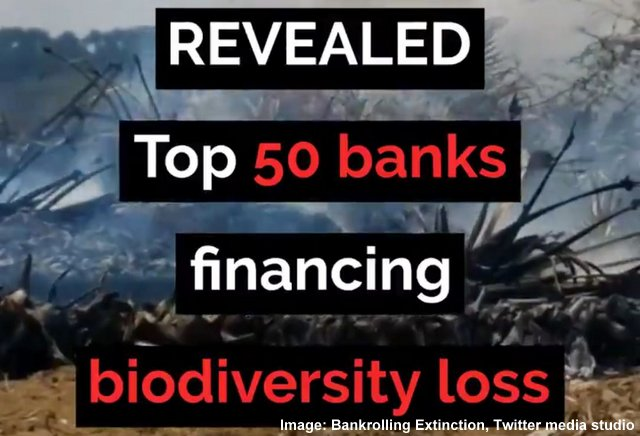 To Prevent Extinction, Banks Have To Stop Funding It, Below2C